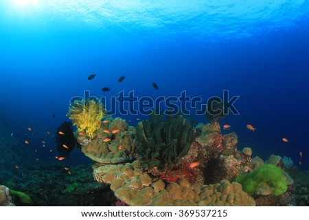 Coral and fish on underwater ocean reef