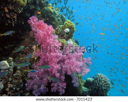 Coral and fish. shot in the Red Sea - stock photo