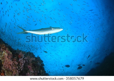 Coral and fish underwater - stock photo