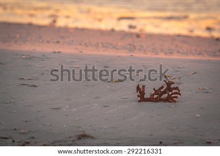Coral and seashells washed up on the beach, left behind as the water recedes at sunrise on a cool, fall morning - stock photo
