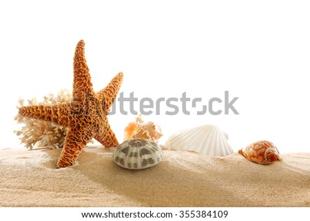 Coral and shells on sand isolated on white - stock photo