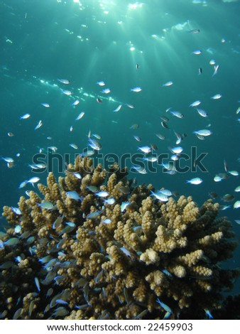 coral and small fish swimming around - stock photo