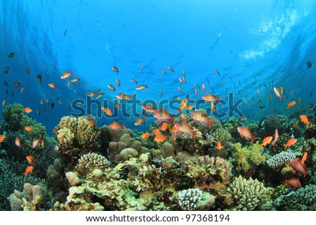 Coral and Tropical Reef on a shallow reef - stock photo