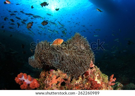 Coral, Anemones and Clownfish (Nemo) - stock photo