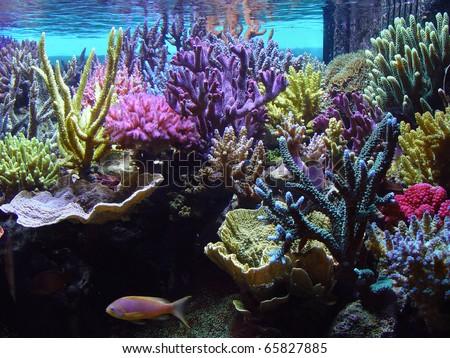 coral aquarium - stock photo