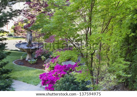 Coral Bark Japanese Maple Tree in Front Law with Water Fountain and Blooming Pink Azalea Flowers - stock photo