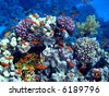 Coral colony and coral fish. Red sea. Egypt. The second edition - stock photo