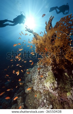 coral, fish and divers - stock photo