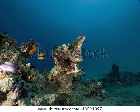 coral, fish and ocean - stock photo