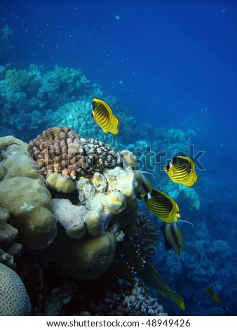 Coral fish of Red sea. Egypt - stock photo