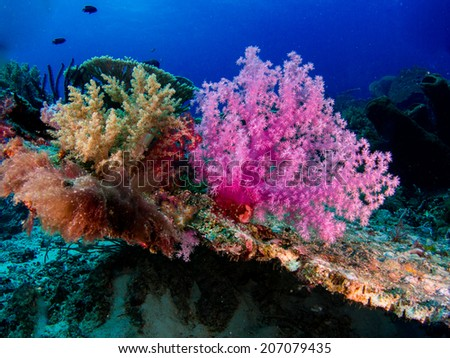 Coral formation. Underwater view to the colorful softcorals in shallow healthy reef. Togeans, Indonesia. - stock photo
