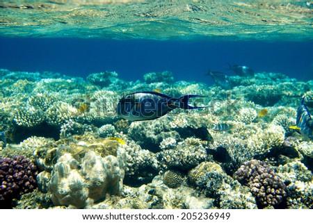 coral garden  - stock photo