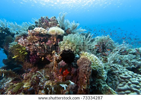 Coral gardens off the coast of Bunaken island