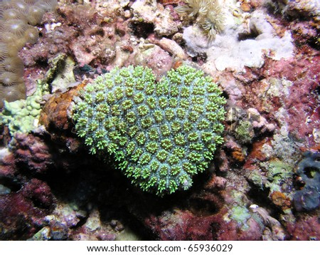 Coral Heart - stock photo
