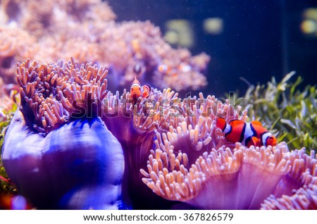 coral in deep blue sea with fish - stock photo