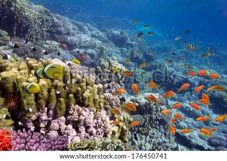 Coral landscape, Red Sea, Egypt. - stock photo