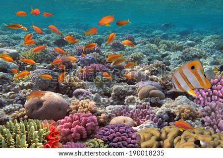 Coral landscape.Red Sea, Egypt - stock photo