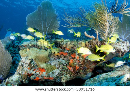 Coral Ledge Composition with schooling with fish, picture taken in Broward County Florida. - stock photo