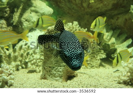 coral life - stock photo