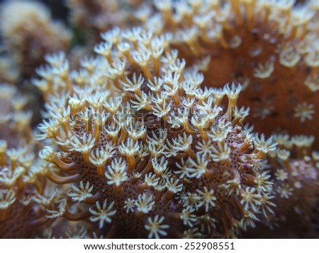 coral macro detail of polyps - stock photo