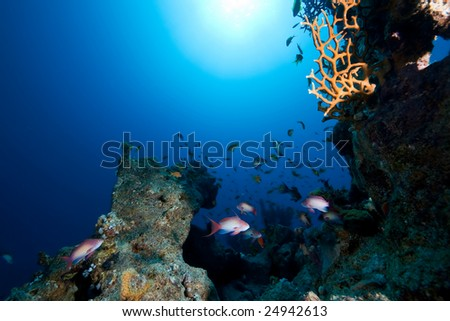 coral,ocean and fish - stock photo