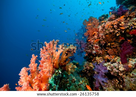 coral, ocean and fish - stock photo