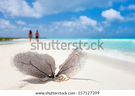Coral on a on a beautiful Caribbean beach - stock photo