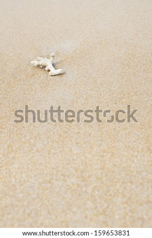 coral on sand against the sea - stock photo