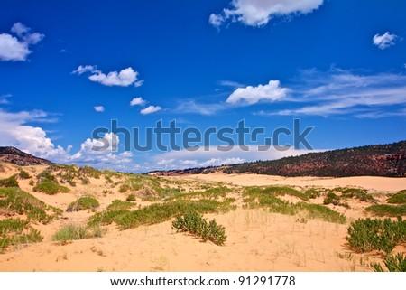 coral pink sand dune state park Utah USA - stock photo