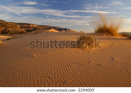 Coral Pink Sand Dunes at sunset. Ripples in the sand lead into the  sinuous dune shape with clouded blue sky above.