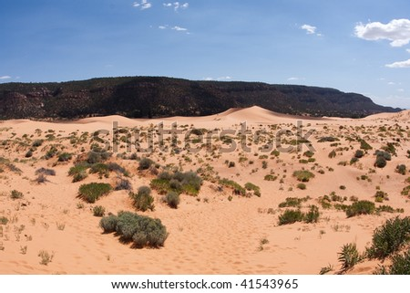 Coral Pink Sand Dunes State Park is a Utah state  that features coral-hued sand dunes located beside red sandstone cliffs. - stock photo