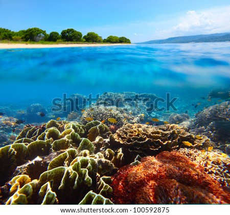 Coral reef and clear sea of the Bali Barat National Park - stock photo