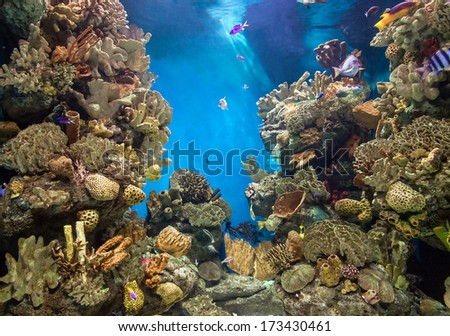 Coral reef and fish background - beauty in nature