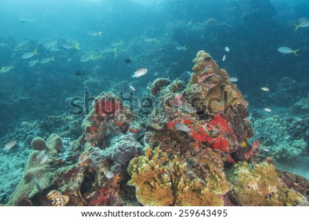 Coral reef and fishes at the colorful tropical sea - stock photo