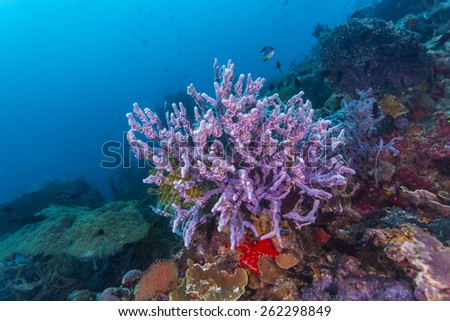 Coral reef and fishes at the colorful tropical sea. - stock photo