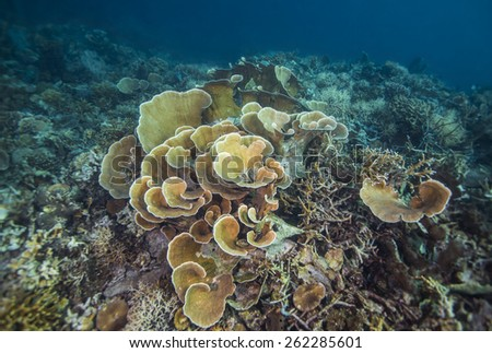 Coral reef and fishes in the colorful tropical sea. - stock photo