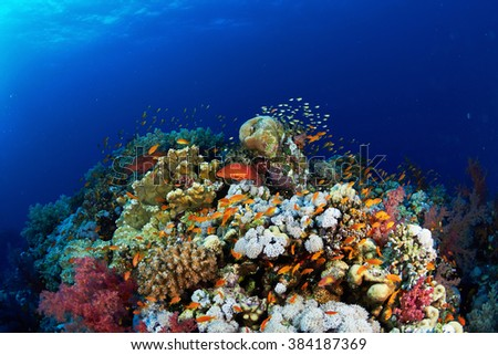 Coral reef and fishes in the Red Sea, Egypt. - stock photo