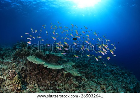 Coral reef and shoal of small fish in the tropical ocean - stock photo