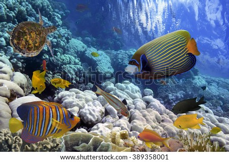 Coral Reef and Tropical Fish iin the Red Sea, Egypt