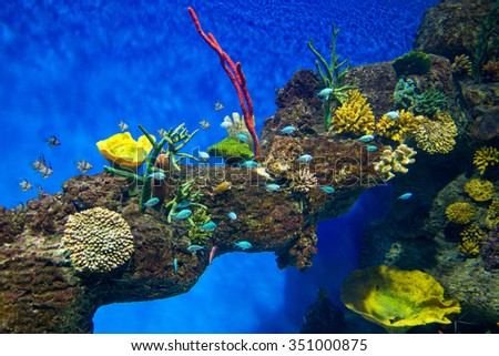 Coral Reef and Tropical Fish in Sunlight. - stock photo