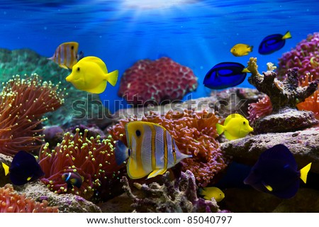 Coral Reef and Tropical Fish in Sunlight - stock photo