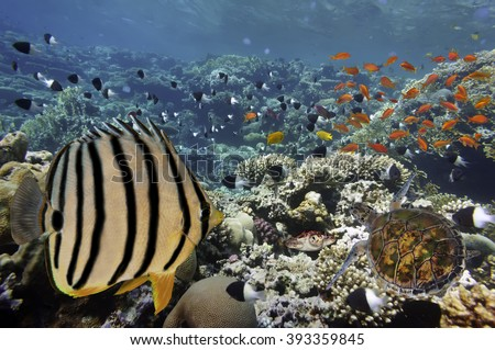 Coral Reef and Tropical Fish in Sunlight. Red Sea, Egypt - stock photo