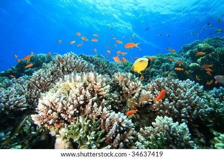 Coral Reef and Tropical Fish in the Ocean