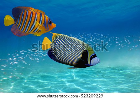 Coral Reef and Tropical Fish in the Red Sea, Egypt.