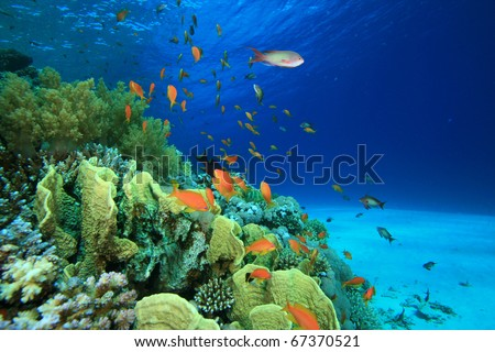 Coral Reef and Tropical Fish in the Red Sea, Egypt - stock photo