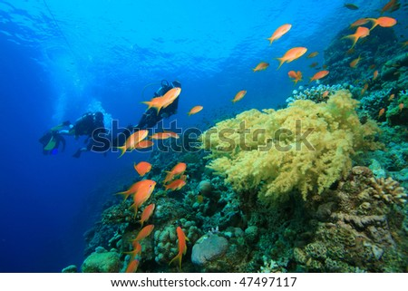 Coral Reef and Tropical Fish with family Scuba Diving in background - stock photo