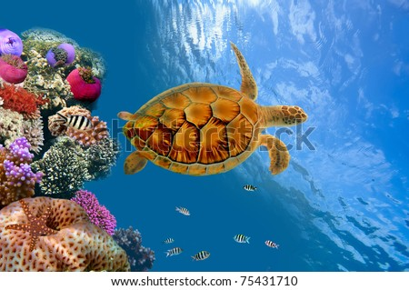 Coral reef and turtle , Siam Bay, Thailand - stock photo