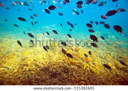 coral reef area in Red sea - stock photo