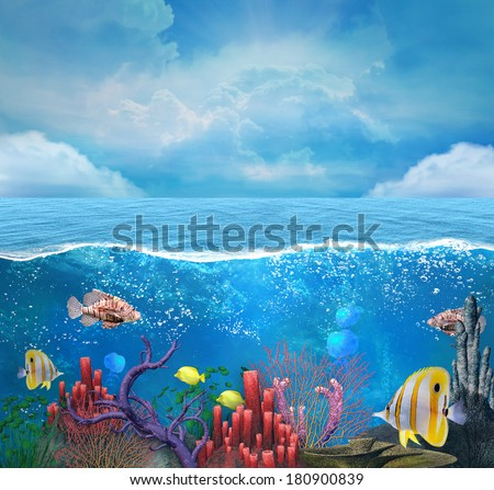 Coral reef background - stock photo