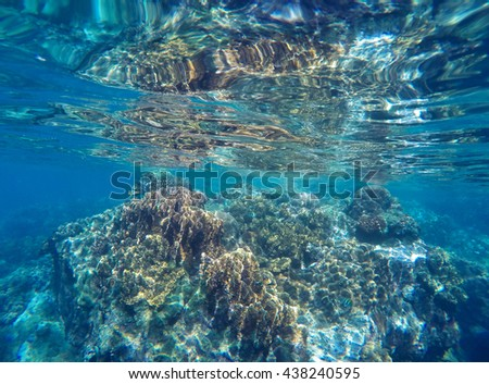 Coral reef close to surface of sea during low tide. Fragile ecosystem of ocean with coral and sea plant. Seashore wildlife. Grey corals in blue water. Underwater landscape of tropical sea close photo - stock photo